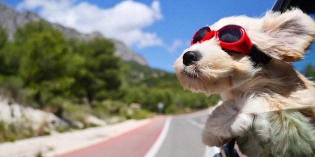 Voyager en train avec son chien : les infos à connaître !