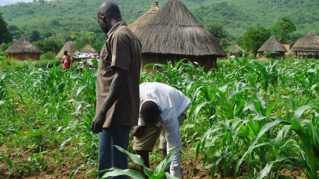 youth-farming-1062x598.jpg