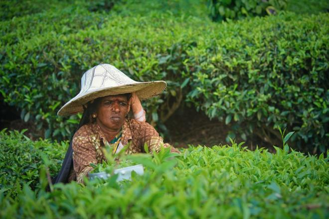 women in agriculture in nigeria