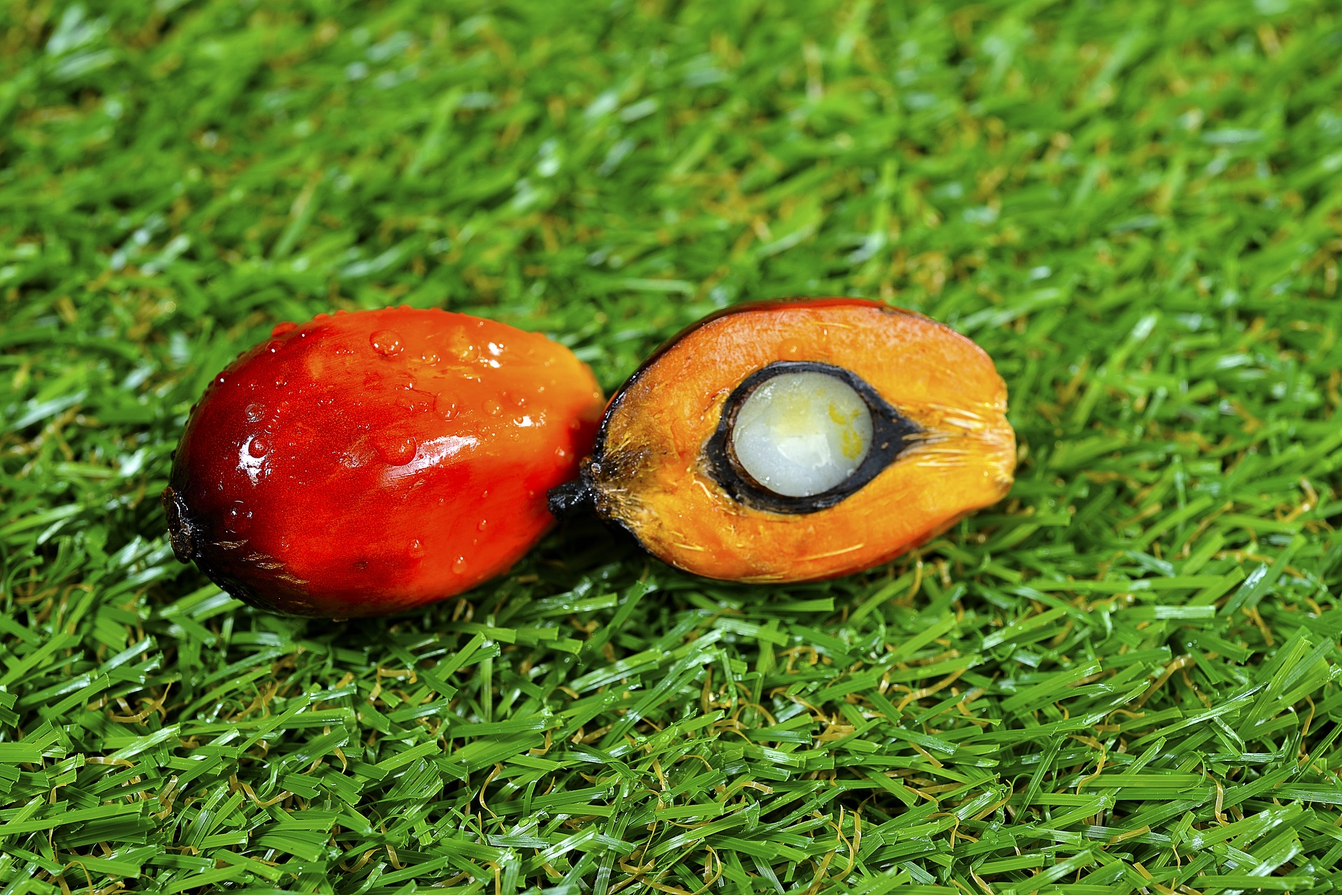 largest-palm-oil-traders-palm-oil-fruit-closeup