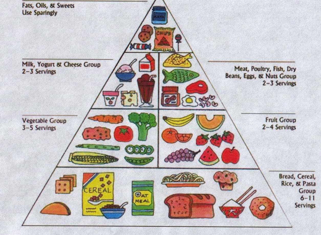 new food pyramid diagram square d air compressor pressure switch wiring york times commodore herbivore