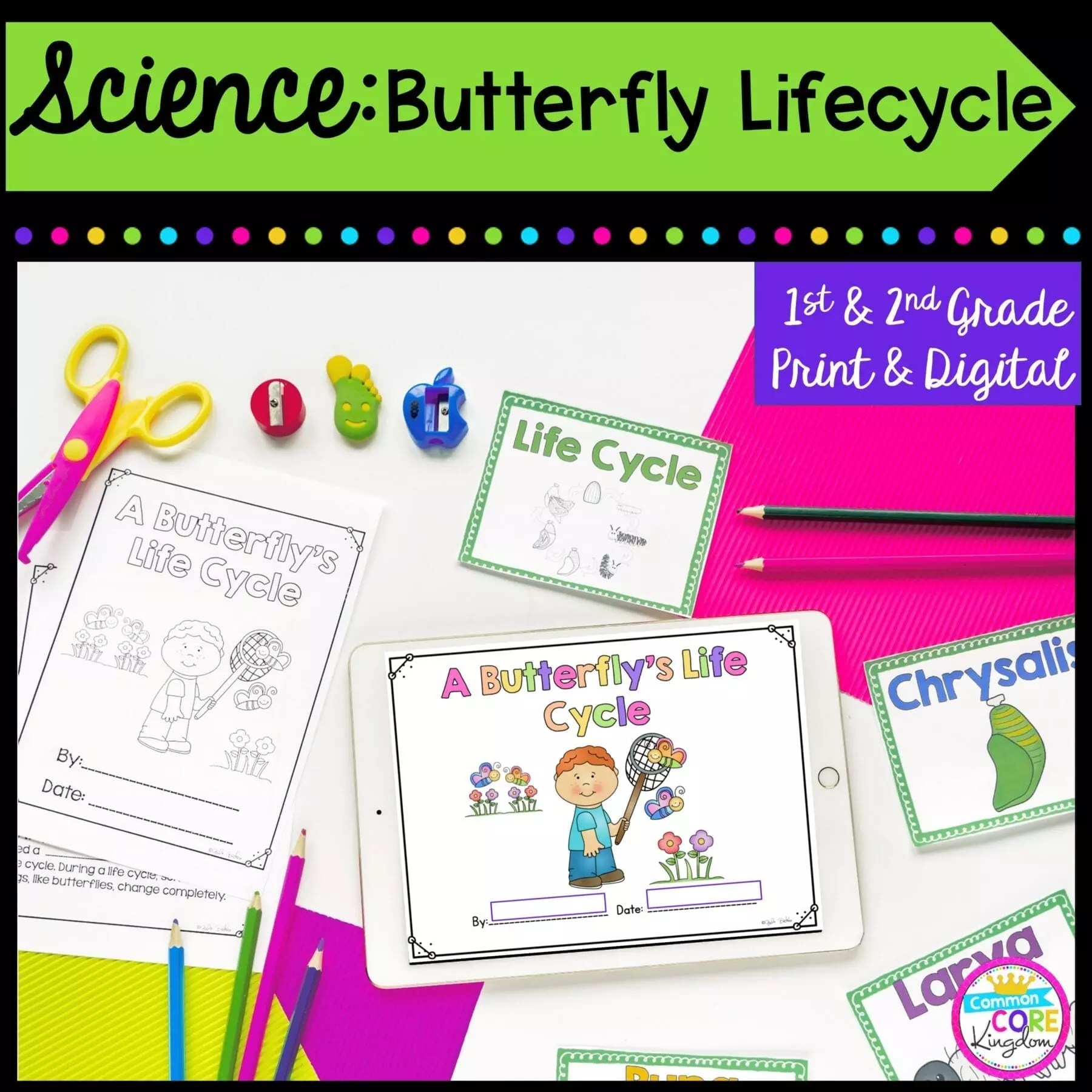 hight resolution of Butterfly Life Cycle- 1st \u0026 2nd Grade Google Slides \u0026 Seesaw Distance  Learning   Common Core Kingdom