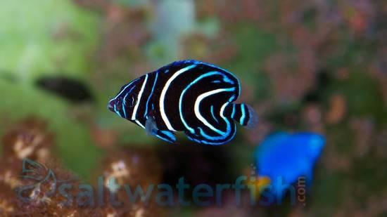 Led Aquarium Lighting Reviews