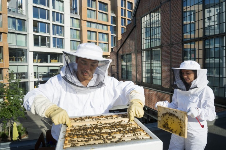 Apiarist tend to bees at the Vulkan Apiary. Photo: Aspelin Ramm.
