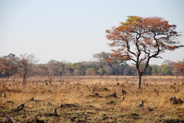 Small termite mounds in Zambia