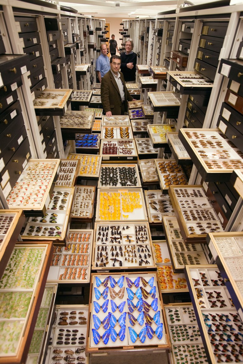 Photograph of entomology specimens arranged within one aisle of the Entomology Department compactor collection cabinets at the Smithsonian Institution's National Museum of Natural History.