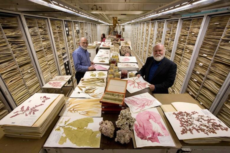 Smithsonian botanists displaying algae specimens, including coraline algae, wet specimens and the usual herbarium sheets