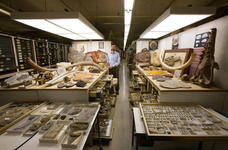 Photo of specimens from the paleontology collection in the Smithsonian Institution's National Museum of Natural History.