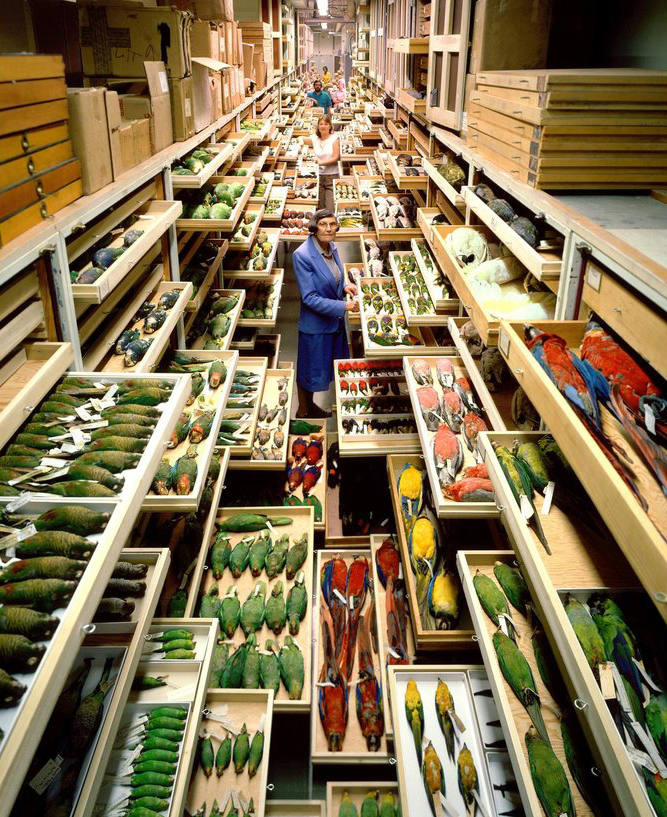 Feather identification expert Roxie Laybourne surrounded by specimens from the Smithsonian Natural History Museum's avian collection