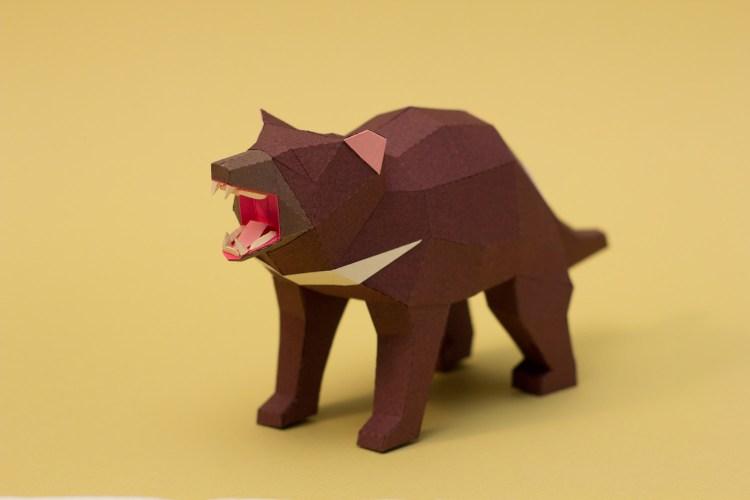 Demonio de Tasmania / Tasmanian devil (Sarcophilus harrisii) by Estudio Guardabosques