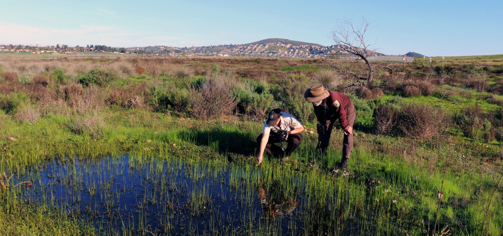 Rangers and biologist look for endangered fairy shrimp in a vernal pool