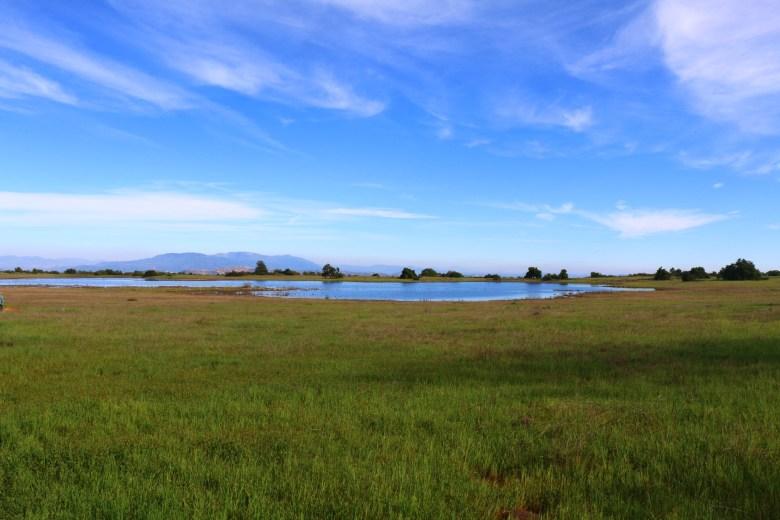 A large vernal pool on the Santa Rosa Plateau
