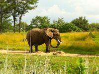 Indianapolis Zoo Visit - elephants