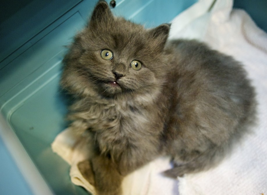 Smudge Kitten