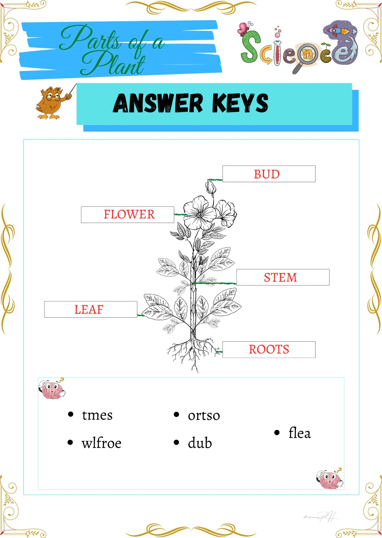 Grade 1 Science Worksheets   Parts and Cycle of Plants [ 2000 x 1419 Pixel ]