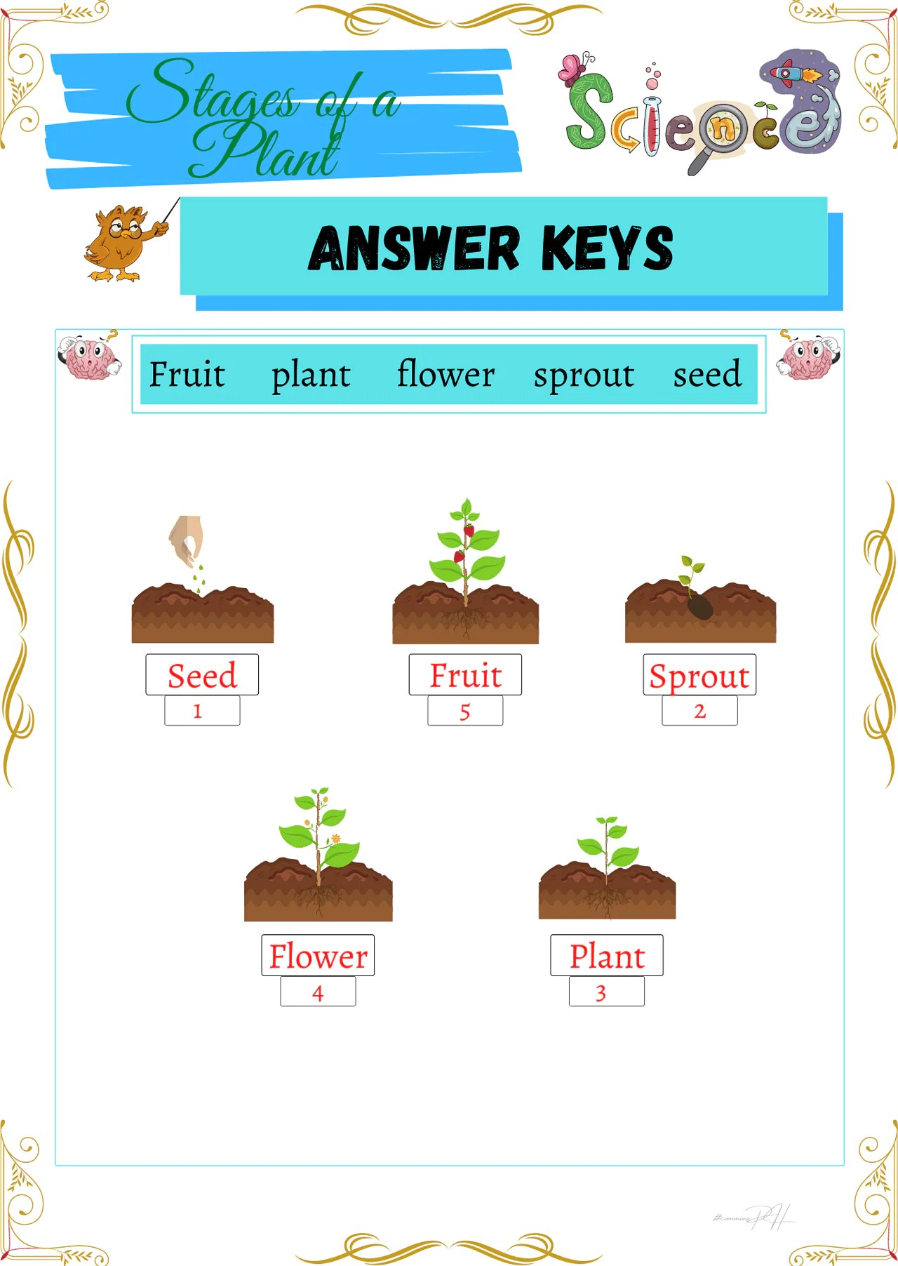 medium resolution of Grade 1 Science Worksheets   Parts and Cycle of Plants