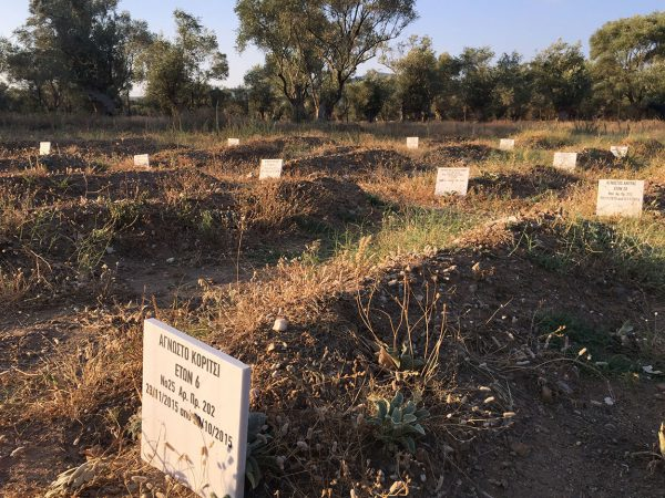refugee-cemetary-in-overgrown-olive-grove_1150