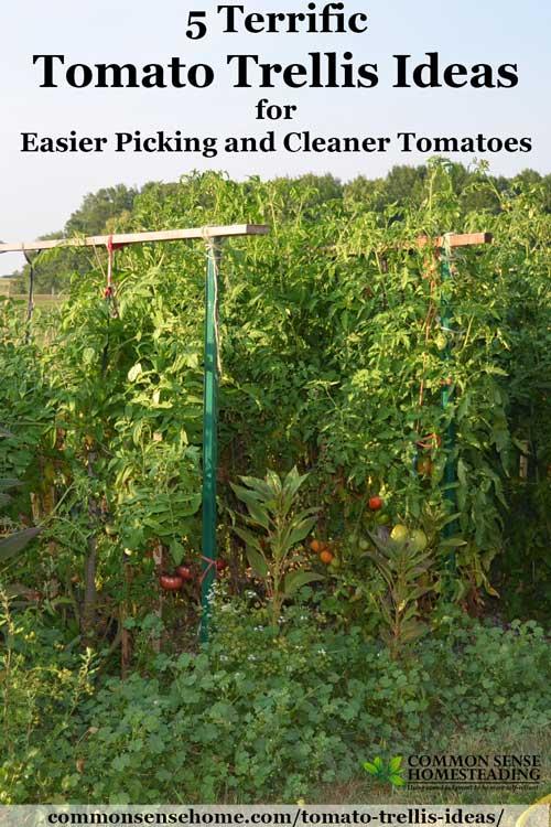 5 Terrific Tomato Trellis Ideas For Easier Picking And Cleaner