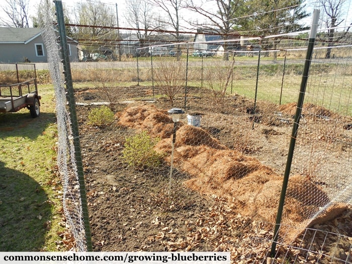 Blueberry fencing and bird netting enclosure to keep out deer and birds