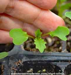 plant seed germination diagram [ 1024 x 1024 Pixel ]