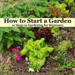 How To Start A Garden 10 Steps To Gardening For Beginners