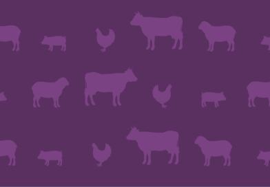Live Animal Exports