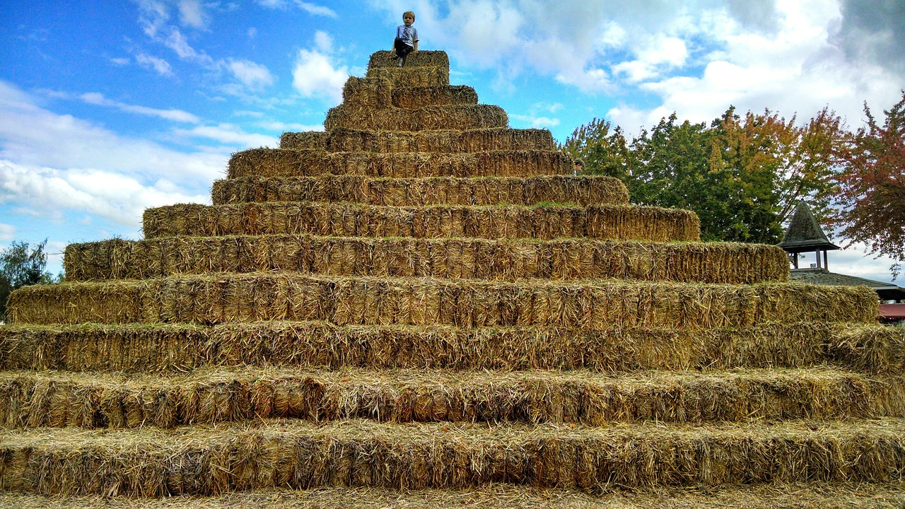 finding a project manager can be like finding a needle in a haystack