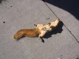 site-journal-3-squirrel