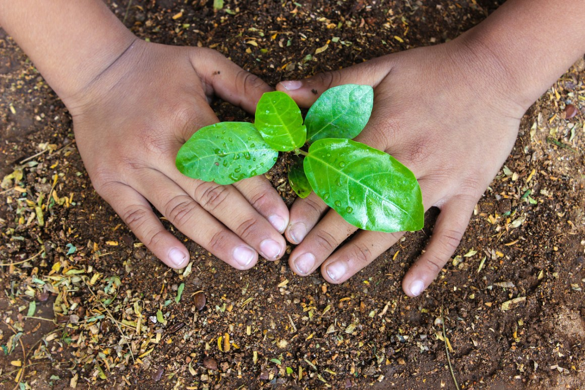 Planting a sapling for clean and green environment
