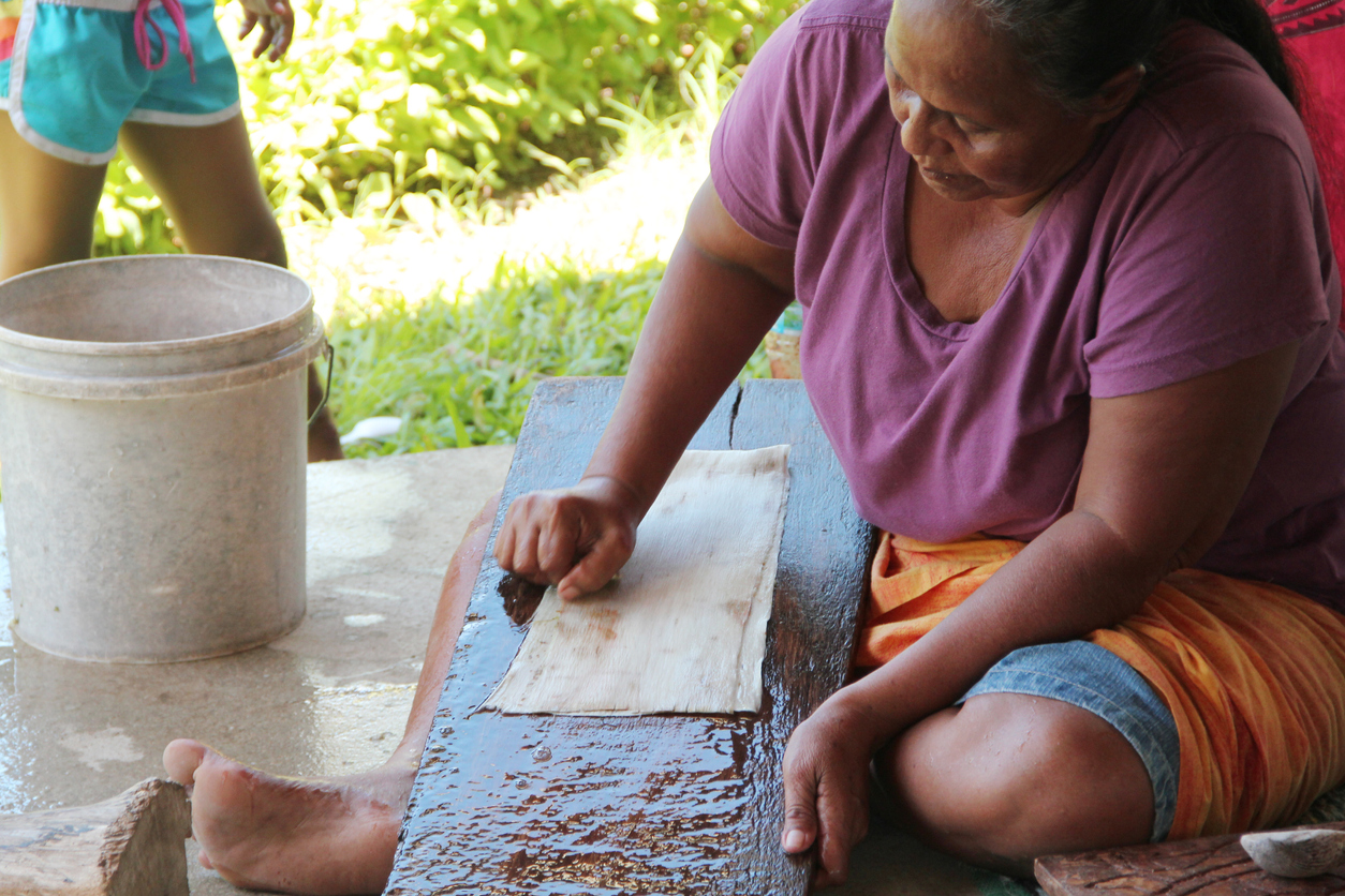 Samoan Agriculture - A Samoan woman cleans the inner bark with a shell scraper, using a sloping board for support when making the bark cloth.