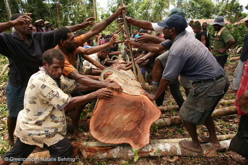 Local Men with Logged Tree - New Guinea - commsforchange.com.au