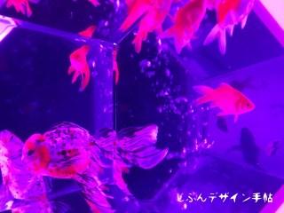 アートアクアリウム2017東京に行ってきた!混雑状況レポ【画像あり】
