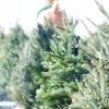 IKEAクリスマスツリーもみの木の発売日を知るには?値段や購入方法は?