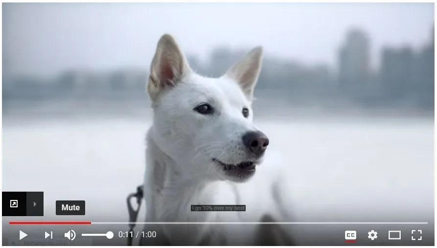 Korean Dog Jindu
