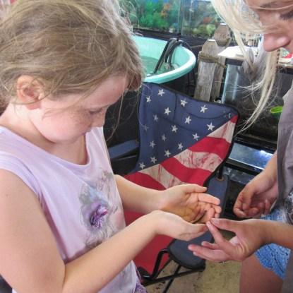 beavertail-kate-ringneck-snake
