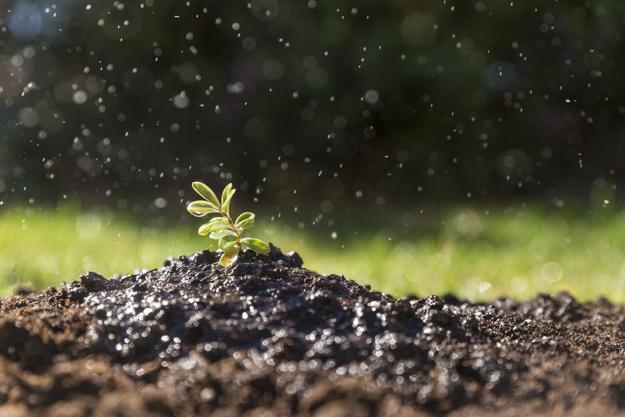 freshly-watered-plant_23-2147609759.jpg