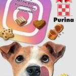 Los perros y los gatos son los protagonistas del Instagram de Purina