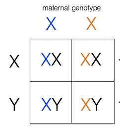 x linked inheritance [ 1270 x 648 Pixel ]