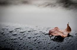 A Hard Rain's A-Gonna Fall in WR