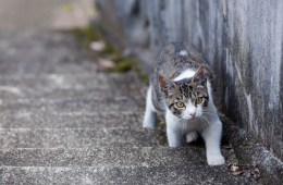 So You Found a Stray Animal in KW: Now What?