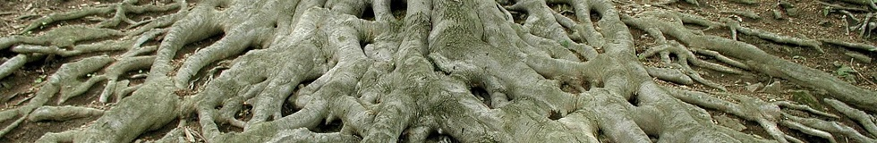 Roots of Big Old Tree