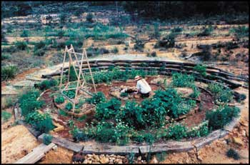 A large circular garden can provide a number of allotments or can be used as a shared garden.   Coutour ditches (swales) were excavated to catch water and fruit trees planted on the slope behind the circular vegetable garden at the Interlife project in NSW's Blue Mountains.