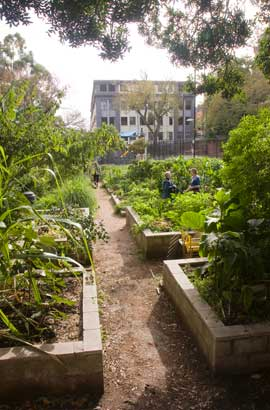 Wooloomooloo Community Garden is set amid the medium density dwellings and businesses between the CBD and Potts Point.