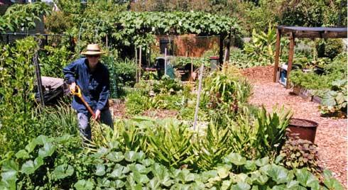 Easten Suburbs Community Garden