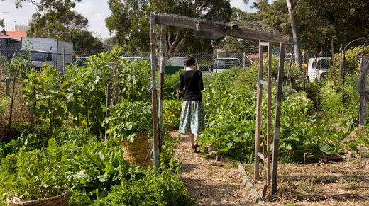 Adelaide community garden contact, claire nettle, takes a stroll below the arches at Randwick Community Organic Garden.