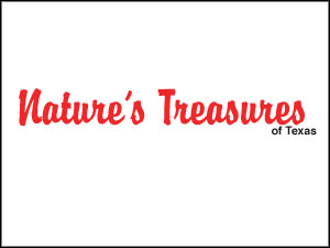 NaturesTreasures