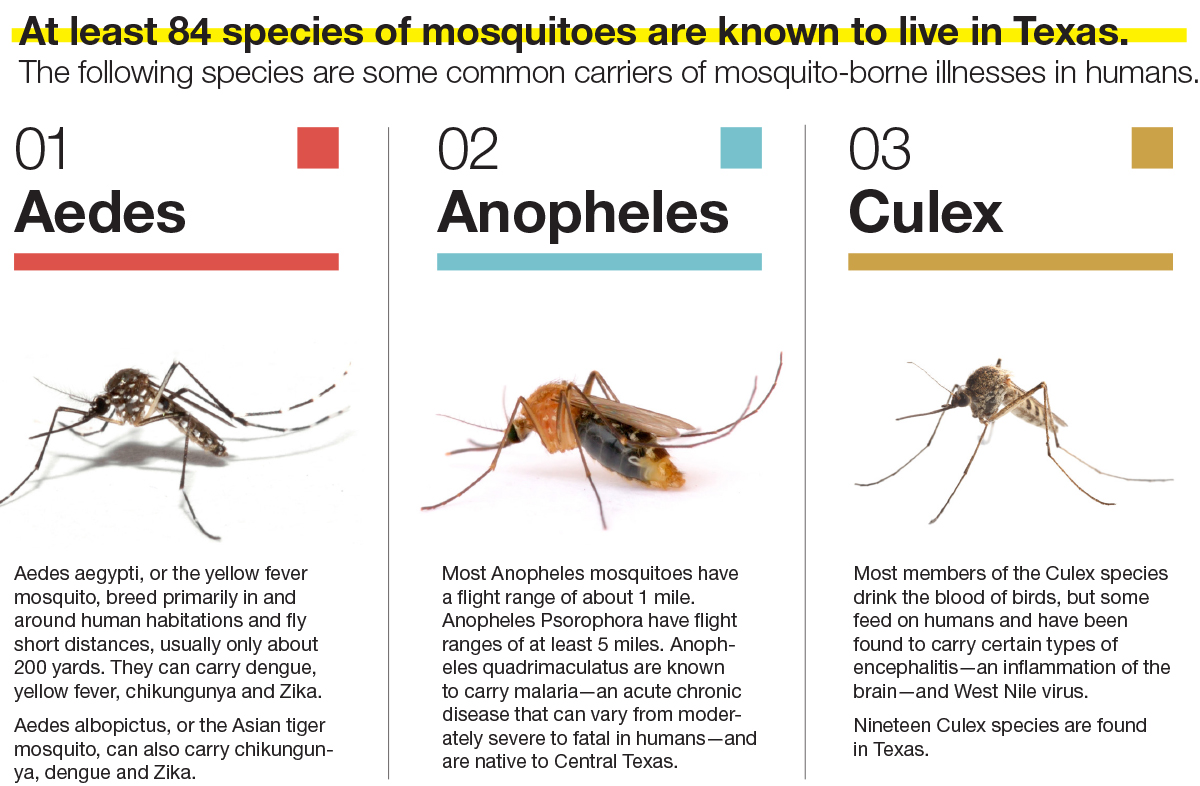impact on mosquitos Hurricane irma's impact on mosquitoes september 18, 2017 hurricane irma press release for immediate release: 09/18/2017 for further information, contact shelly redovan, deputy director.