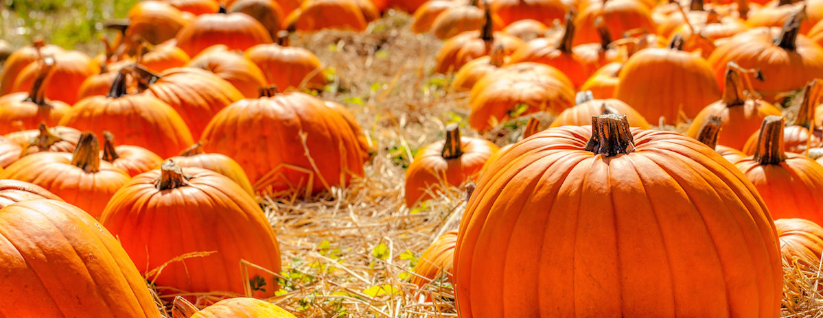 Pumpkin patches and haunted house have opened this month across the Dallas-Fort Worth area.