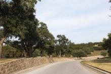 Featured Neighborhood: Belterra