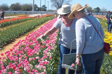 Grapevine Garden Club's plant sale will be held April 22.